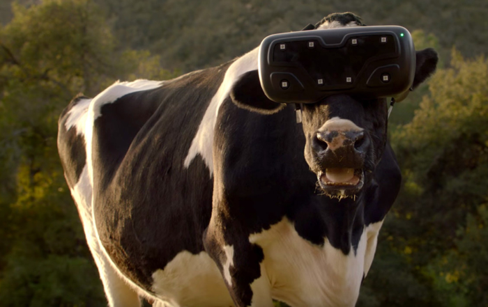 vaches VR